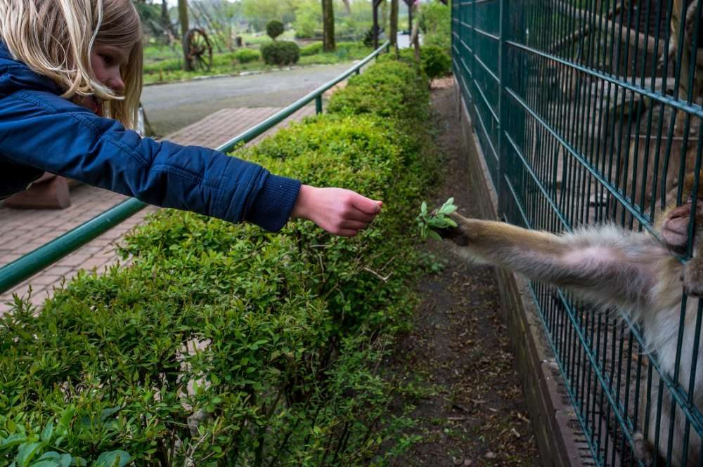 חיי השבי של בעלי חיים בגני החיות