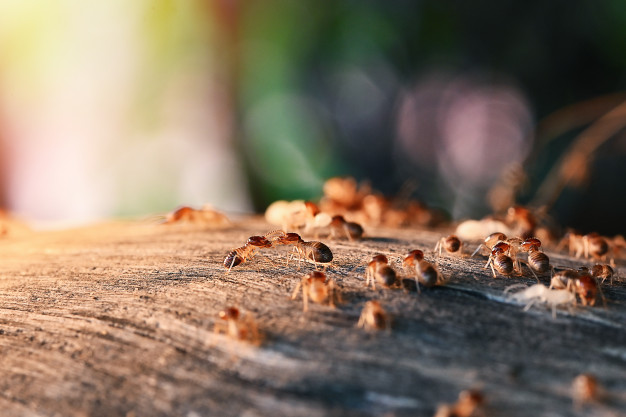 colony-termites-eating-wood_1962-1766-09768055