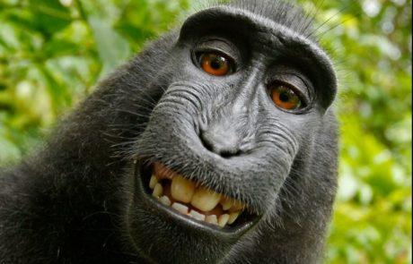 ג'יין גודול: ההתנהגות של טראמפ מזכירה קוף