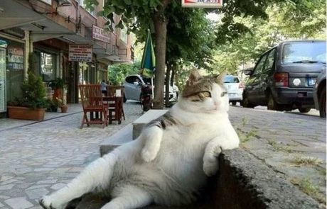 החתול הסתלבטן שהפך לכוכב אינטרנט הונצח בפסל חדש