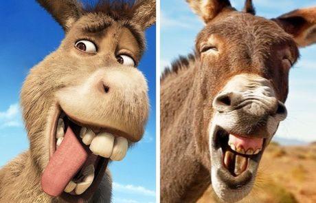 12 בעלי חיים שנראים כמו שיבוט של דמויות אנימציה פופולריות