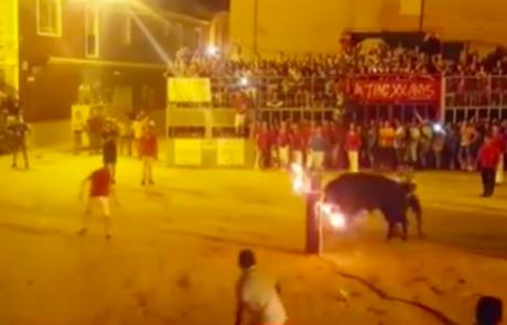 מחאות קשות בעקבות סרטון גרפי המתעד שור שהרג עצמו לאחר שקרניו הוצתו