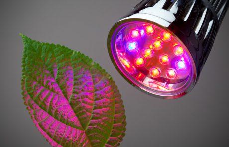 כל מה שצריך לדעת על בחירת תאורה לגידול צמחים