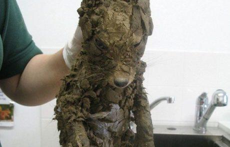 החיה שחולצה הייתה כל כך מלוכלכת בבוץ שאף אחד לא שיער מה היא באמת