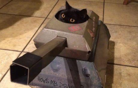 החברה הזו מוכרת טנקים, בתים ומטוסים מקרטון שהחתול שלכם חייב