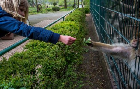 תמונות מהפנטות מתעדות את חיי השבי של בעלי חיים בגני החיות