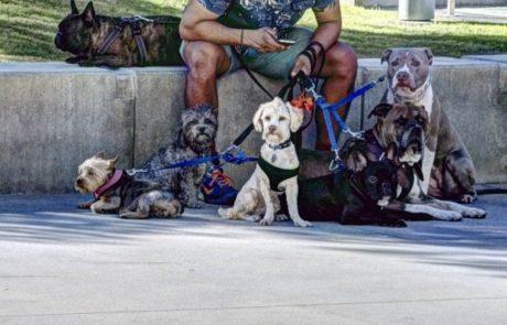 מדוע עליכם להזמין שירות הוצאת כלבים?