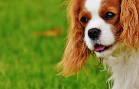 מספרת כלבים בירושלים: כל השיקולים אם לספר את הכלב או לא