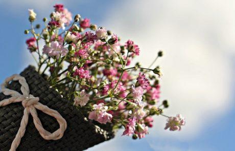 פרחים לנפש המאושרת