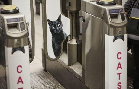 חתולים החליפו את כל הפרסומות בתחנת רכבת תחתית אחת