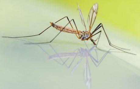 רשת נגד יתושים, לימון או גרניום – כל הכלים כשרים במלחמה נגד יתושים!